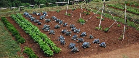 Potager les bases nopanic for Organiser son jardin potager
