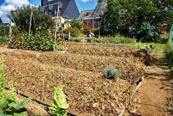 Permaculture paillage en couche nopanic for Paillage jardin