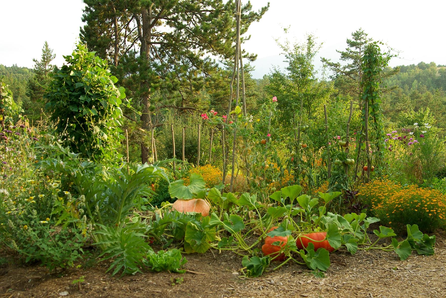 Association De L Gumes Au Jardin Potager Bio Nopanic