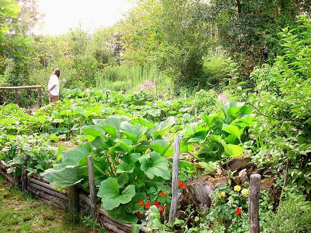 Association de l gumes au jardin potager bio nopanic for Jardin potager 2015
